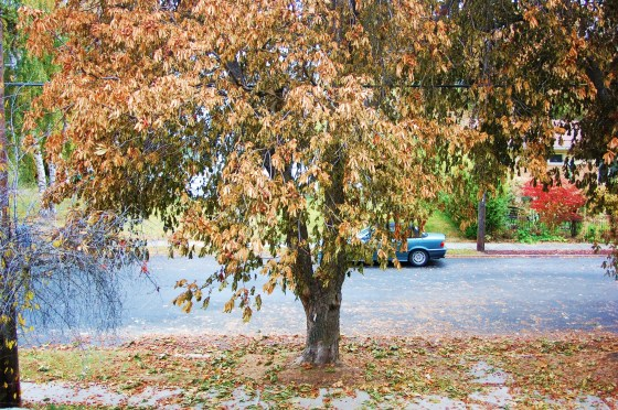 fall 001